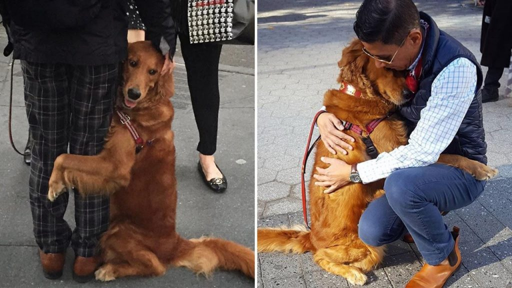 His dog would give hugs and handshakes to anyone on the street, so he took her to the hospital