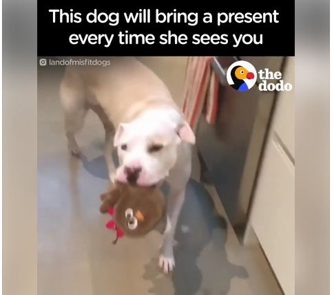 This Dog Loves Her Humans So Much She Brings Them Gifts Every Morning