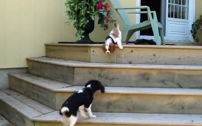 Little pup is having second thoughts about the stairs, but watch who shows up to help