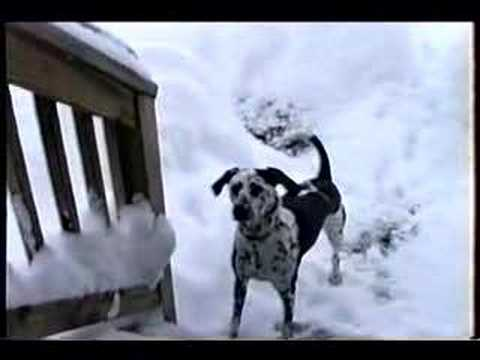 Hey, Join Your Friends On PMG! Man let his dog outside after a massive snowstorm, and what he caught on camera is priceless