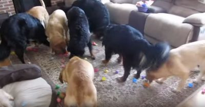 She locks her dogs in the garage then lets them back inside for a huge surprise