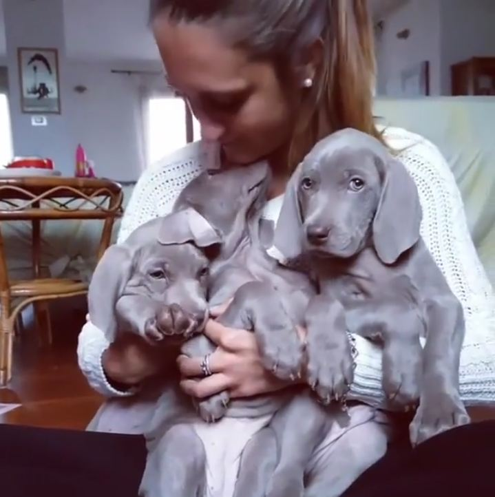 20 Ridiculously Adorable Weimaraners That'll Make You Fall In Love