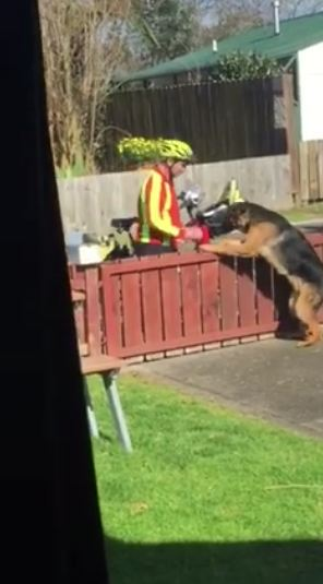 Mailman was seen doing this to a 'dangerous' dog, and it was all caught on camera