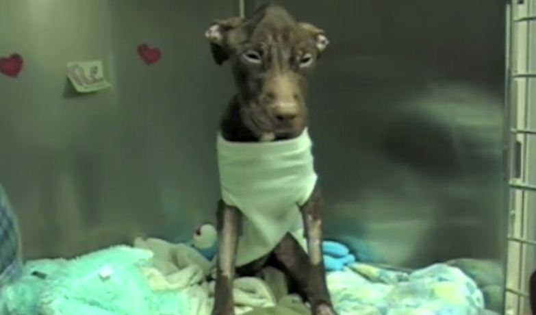 Hey, Join Your Friends On PMG! A dog was thrown 22 stories down a trash chute, and I can't believe what I'm seeing now