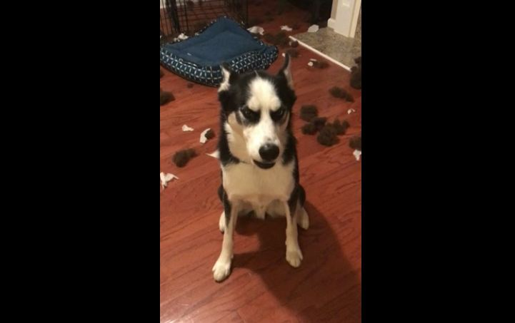 Hey, Join Your Friends On PMG! Hilariously expressive dog talks back to mom when confronted about the mess on the floor