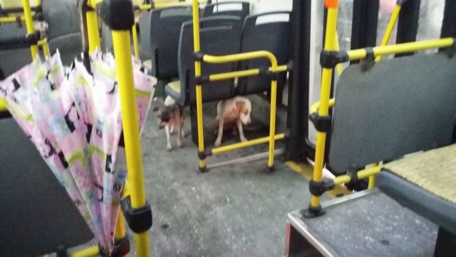 These Dogs Were Shivering, So One Bus Driver Broke The Rules To Bring Them Aboard