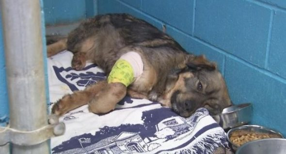 She Was Shot & Left For Dead on the Roadside. Vets Want Answers & Justice.