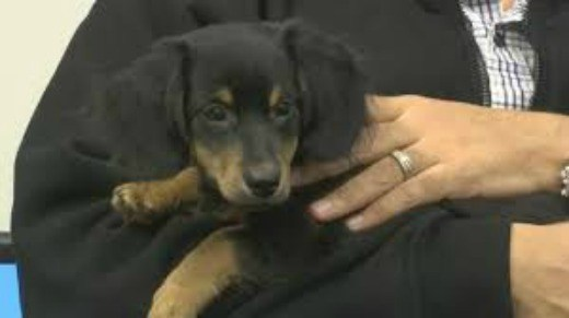 Neighbor rescues puppy left to die in Utica dumpster