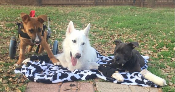 Three Disabled Dogs Are Learning To Take Their First Steps Together