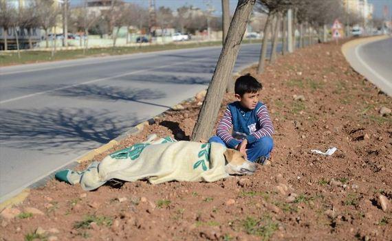 Refugee Boy Refuses To Leave Injured Stray Dog Until Help Arrives