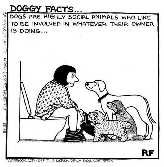 """Hilarious Comics About Life With Dogs By """"Off The Leash"""""""