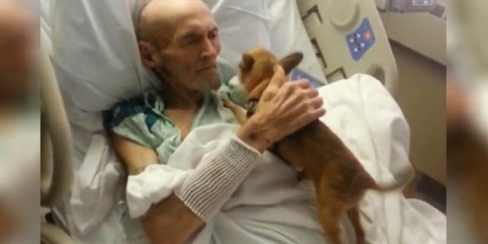 A Hospital Bent Their Rules To Grant A Dying Man's Last Wish To See His Dog