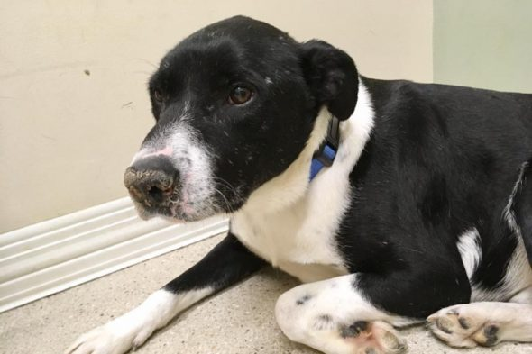 Unloved Dog Who Survived Being Shot in the Head Is Ready for a Forever Family