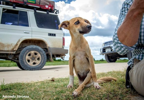 Paraplegic Dog Drags Herself for Miles to Get Help from Elephant Researchers