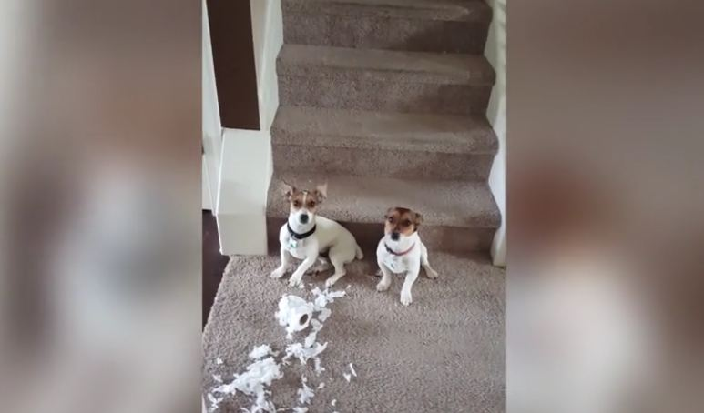 He Arrives Home To Find His Two Dogs And A Mess, But They're In Denial