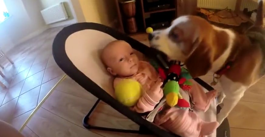 Dog steals toy from the baby and makes her cry. How he apologizes will have you laughing!