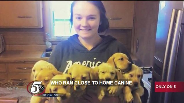 "65 Dogs Have Been Saved from a Woman Running ""Rescue"" Operation in Minnesota"