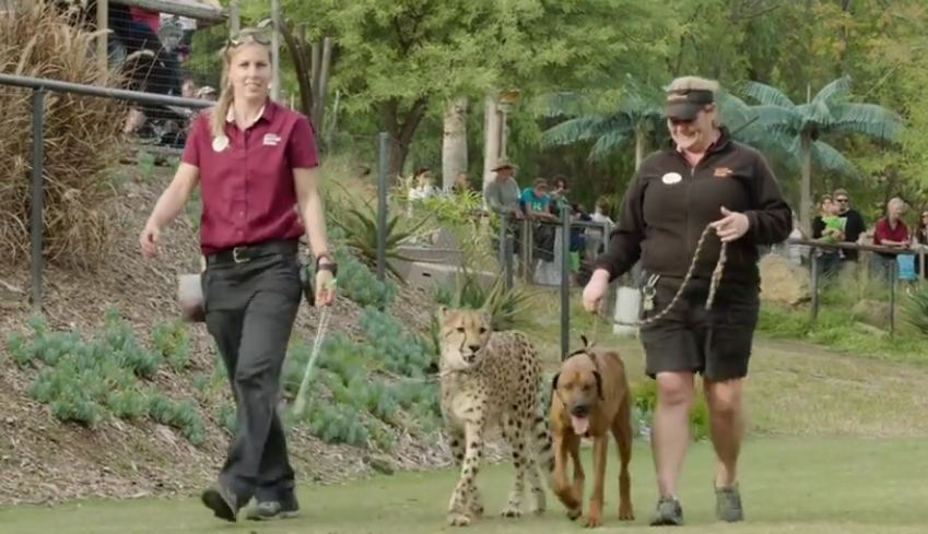 A dog and cheetah met as babies — and just wait until you see them now