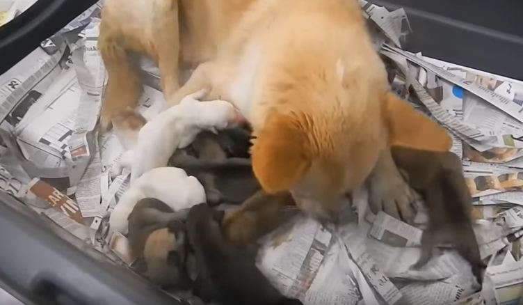 Dog is rescued from a dog meat farm, but rescuers never expected this
