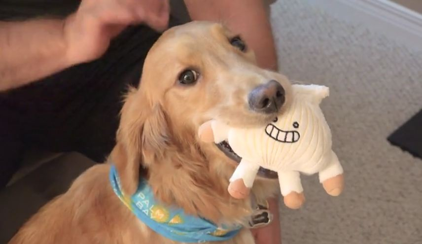 Sad dog lost her favorite toy, but she's about to get a big surprise…