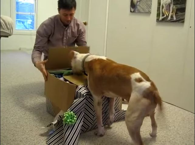 This dog just beat cancer. Now he opens a gift for a birthday he wasn't supposed to live to see.