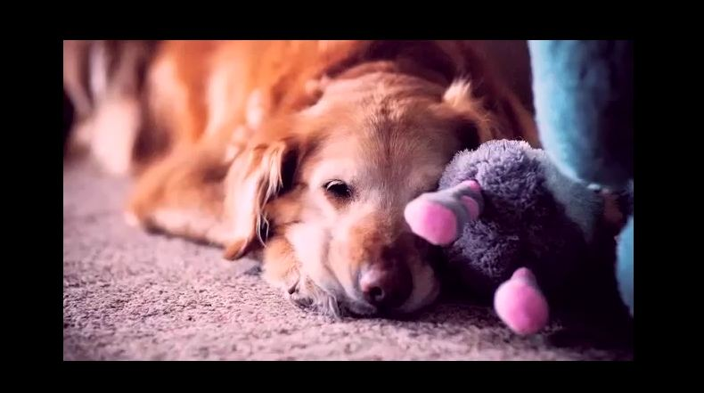 See that dog waiting all day for his owner to come home? The reason's something we can all relate to…