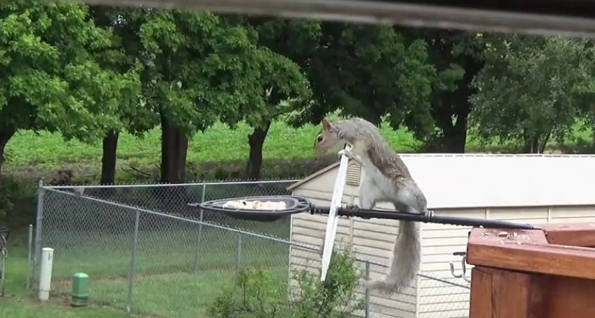 Man tries to 'squirrel proof' the bird feeder, but the result is hilarious
