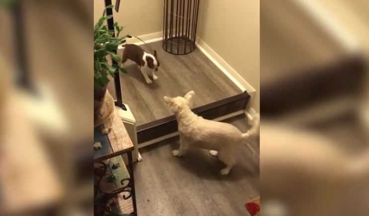 Tiny pup needs help getting down the scary stairs. Thankfully, she has a friend for that…