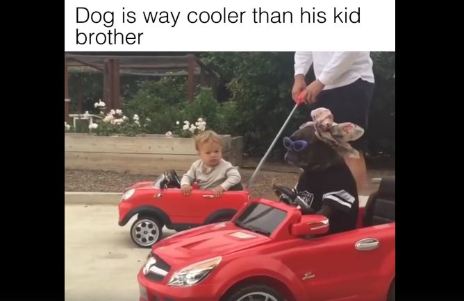 When Your Dog Is Way Cooler Then His Human Little Brother