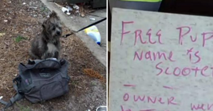 Two Women Find An Abandoned Dog Tied To A Pole — And A Heartbreaking Note Lying Beside Him