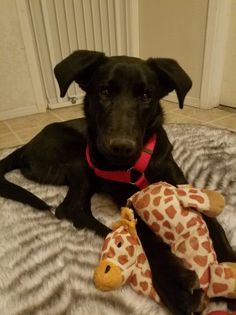 Woman Needs Help Finding Forever Home For A Sick Puppy
