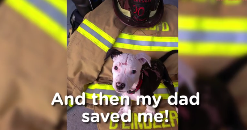 Dog Becomes Firefighter After Being Stuck in a Burning Building