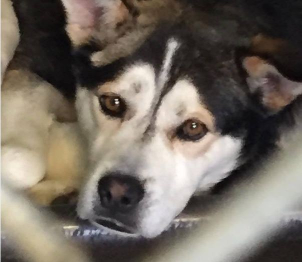 Badly injured dog escapes death row thanks to Good Samaritan