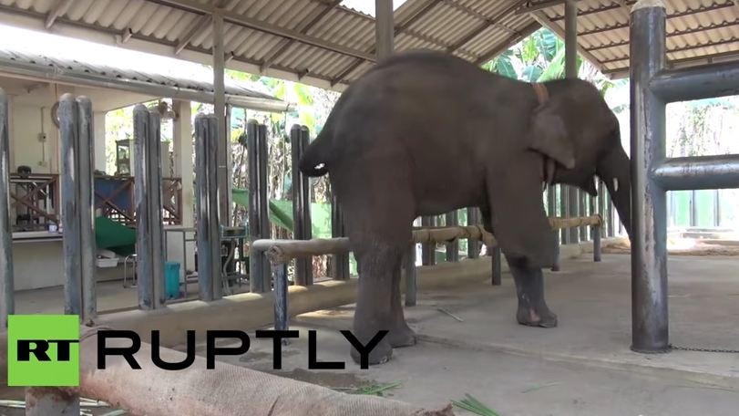 What they just did for this elephant made her smile. Can you believe it?