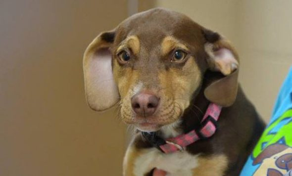 Formerly Abused Dog Finds and Saves a Naked 3-Year-Old Girl in the Freezing Cold