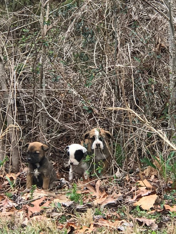 3 puppies were abandoned in a bush, but then a police dog showed up