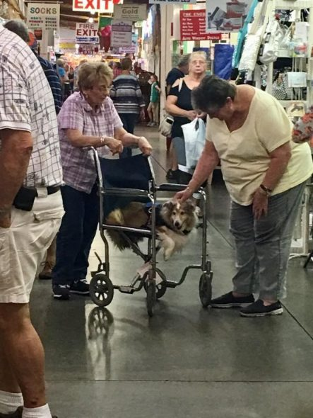 Two of a Kind! Woman Shares Wheelchair with Senior Dog