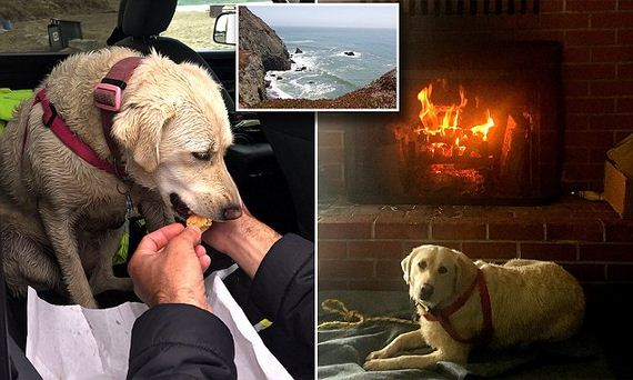 Dog Thought to Have Died in Boating Accident With Owner Found ALIVE 3 Days Later