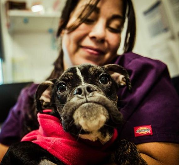 Thought To Be A Corpse, This Dying Dog Makes A Miraculous Recovery