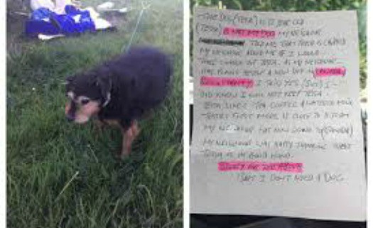 'I don't need a dog': Note left with elderly dog abandoned in a cold, wet field