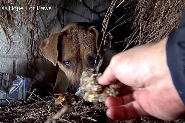 Pit Bull Mama Gives Each of Her Puppies a Kiss (or a Sniff) as They Are Rescued