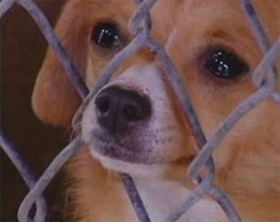 Texas Lawmakers Propose Animal Abuser Registry