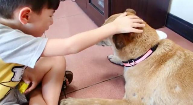 Tearful Boy Gives Heartfelt Goodbye To His 17-Year-Old Dog