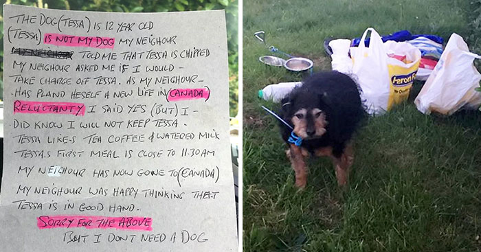 Sad Dog Found Abandoned In A Field With A Note On Her Neck