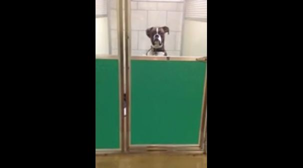 This dog's reaction when dad picks him up from the vet is too much!
