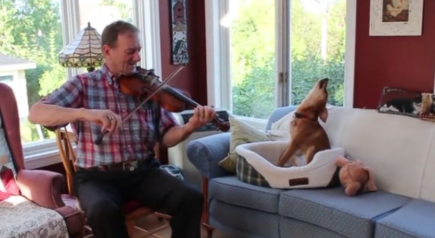Man gets out the fiddle — now just keep your eyes on the dog