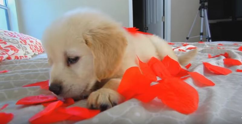 They brought this little puppy home, and there are no words for what followed