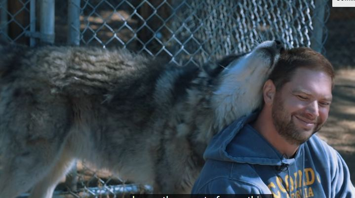 A wolf approaches a veteran, and what happens is something you won't believe