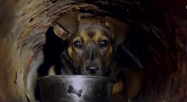 Scared Puppy Hiding In Pipe Gets New Life