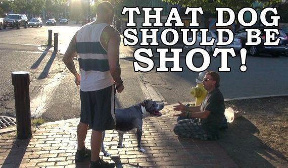 """Man Performs Social Experiment To Show How People React To """"Vicious"""" Dog Breed"""